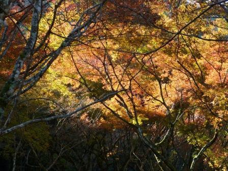 稲荷山公園 紅葉 11