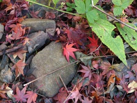 稲荷山公園 紅葉 10