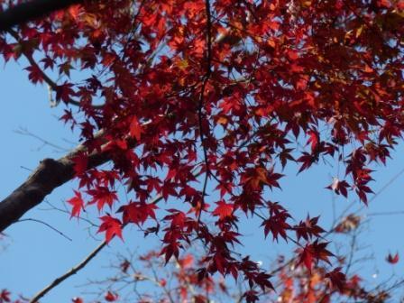 稲荷山公園 紅葉 13