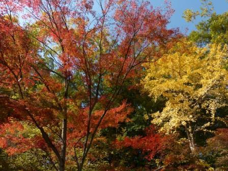 道後公園 紅葉 5