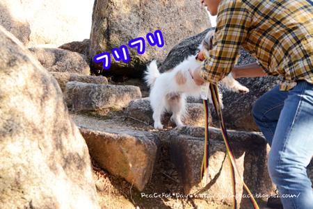 171004_awaji29.jpg