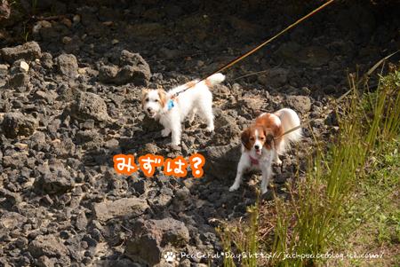 171005_awaji16.jpg