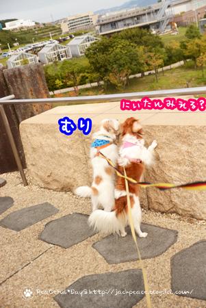 171005_awaji4.jpg