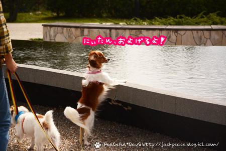 171005_yume1.jpg