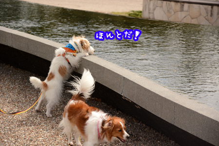 171005_yume2.jpg