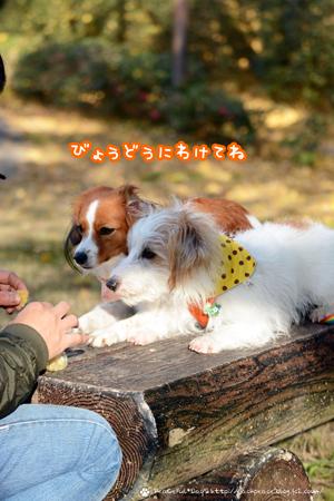 171201_nokami3.jpg