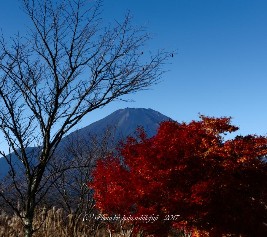 紅葉富士山Sn