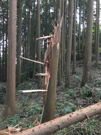2017湯谷ヶ岳/台風被害2