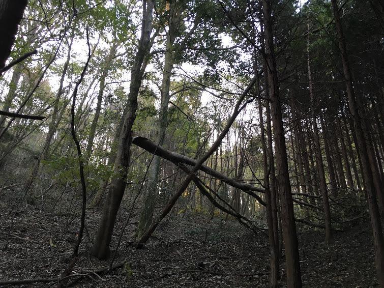 2017湯谷ヶ岳/台風被害