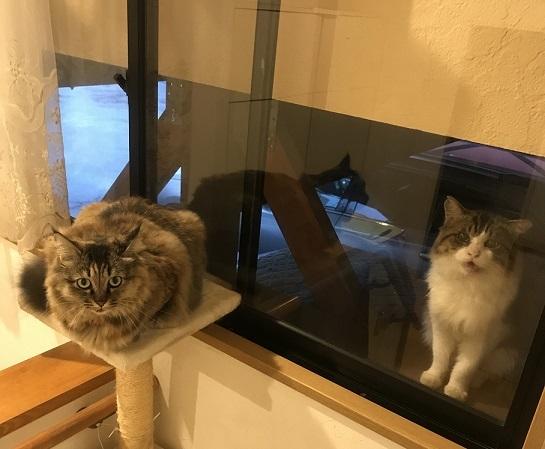 ジーノ&あんこ
