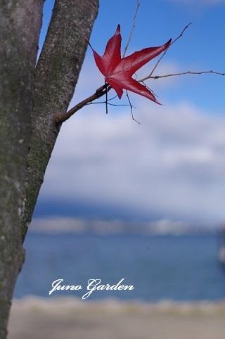 3琵琶湖171119
