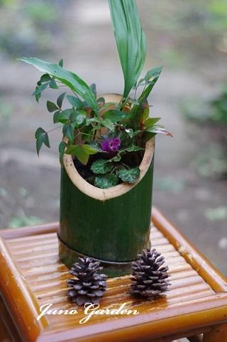 竹の寄せ植え171222