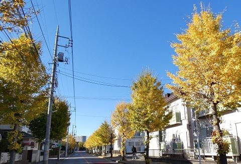 4-1 北鴻巣駅前イチョウ並木
