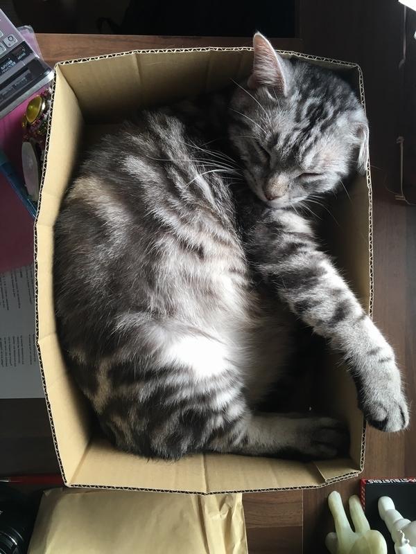 ふうた箱ねんね