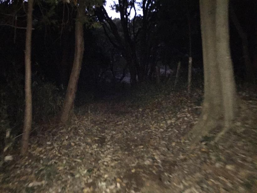森と緑06