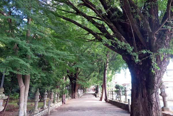 171004積田神社銀杏