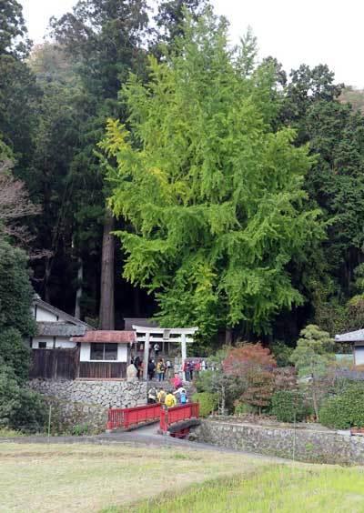 171116白鳥神社