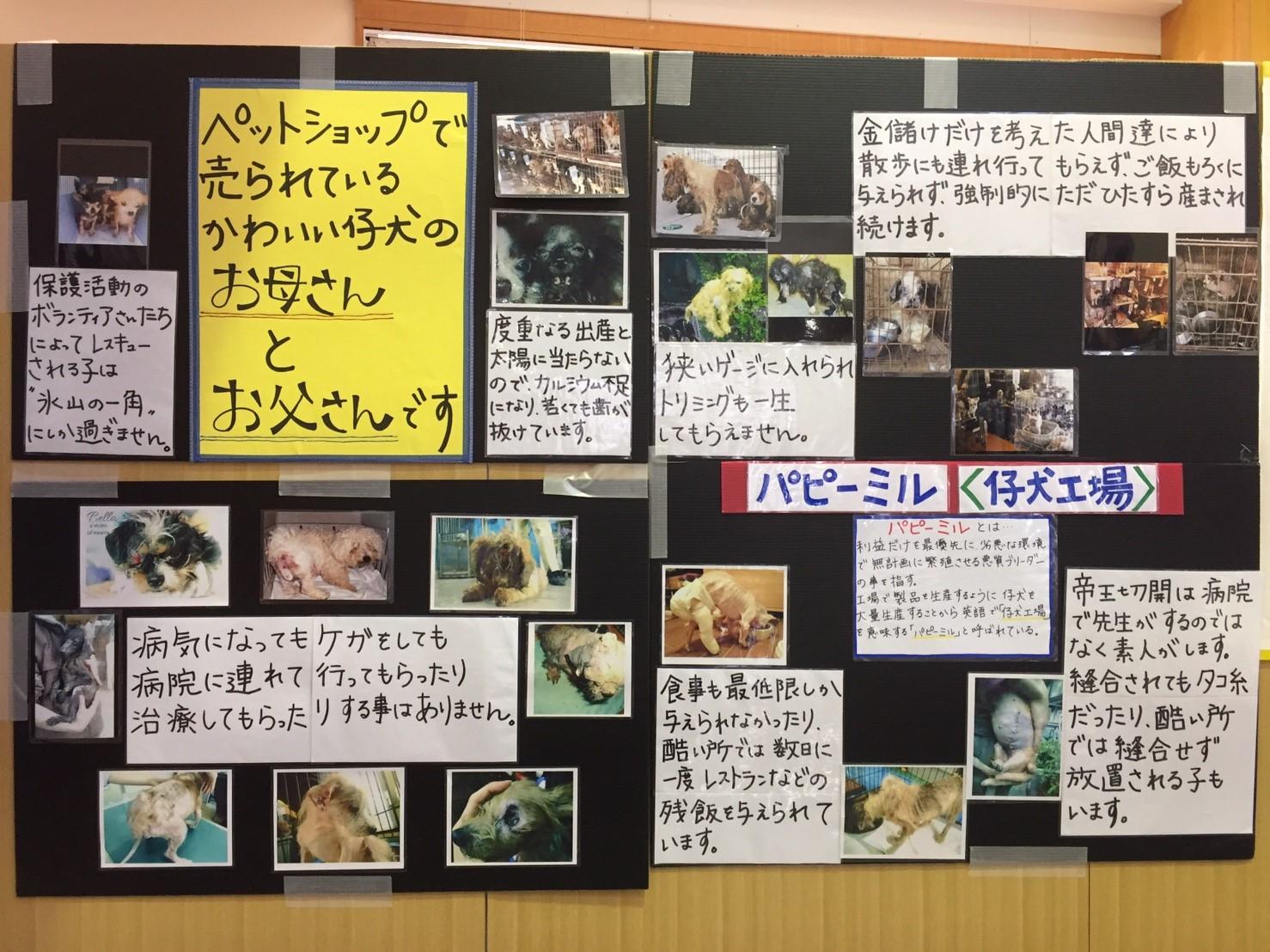 20171119譲渡会_18