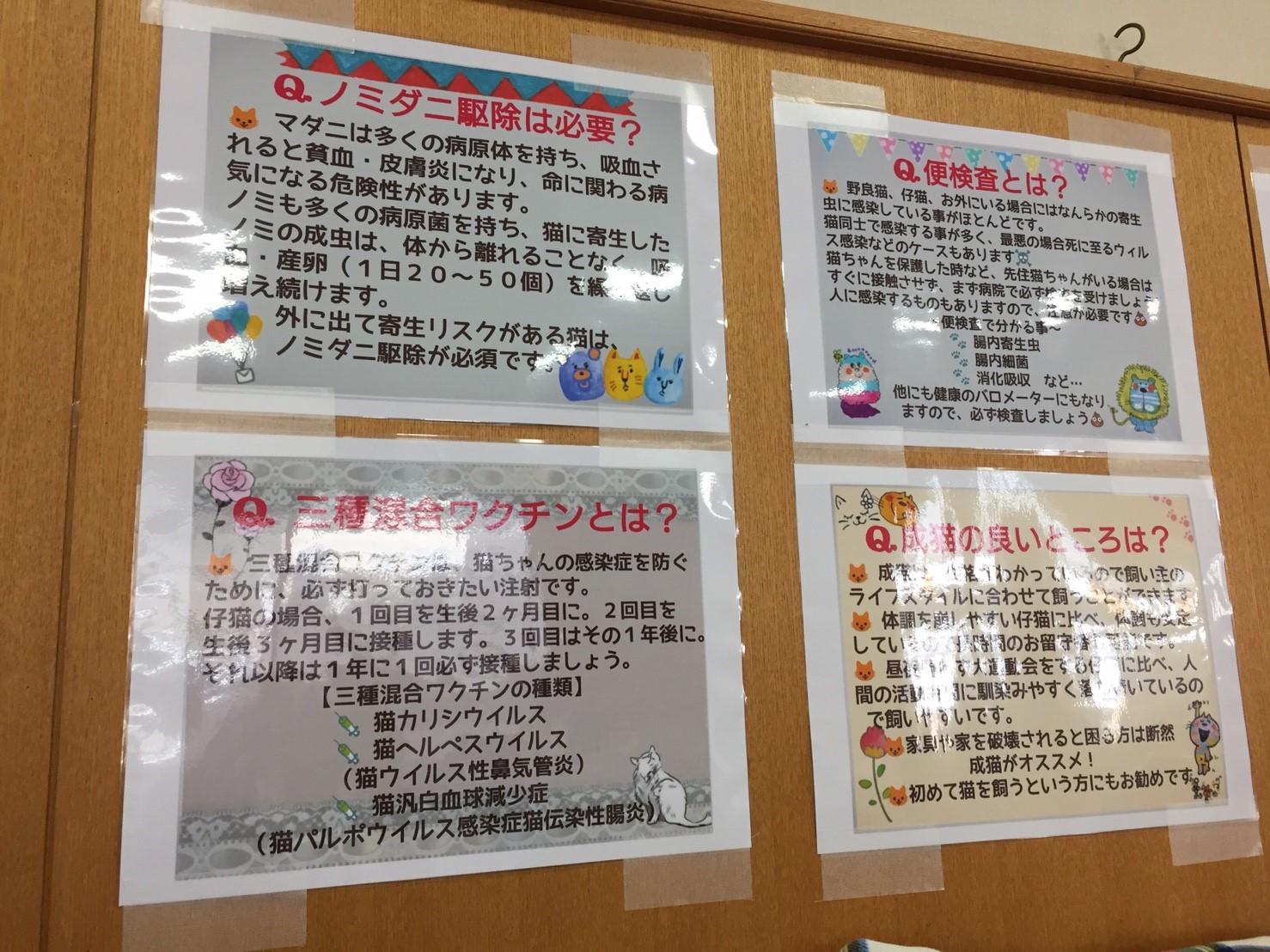20171119譲渡会_25