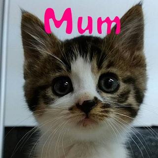 Mum.jpg
