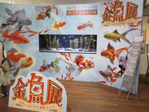 なかがわ水遊園 金魚展