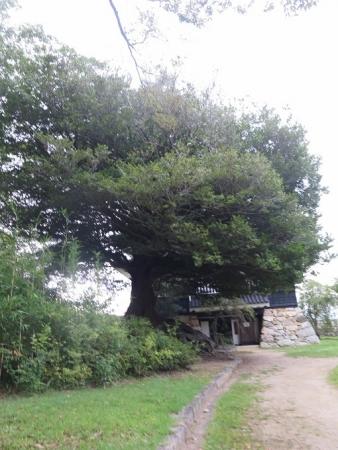 豊橋公園 鉄櫓跡