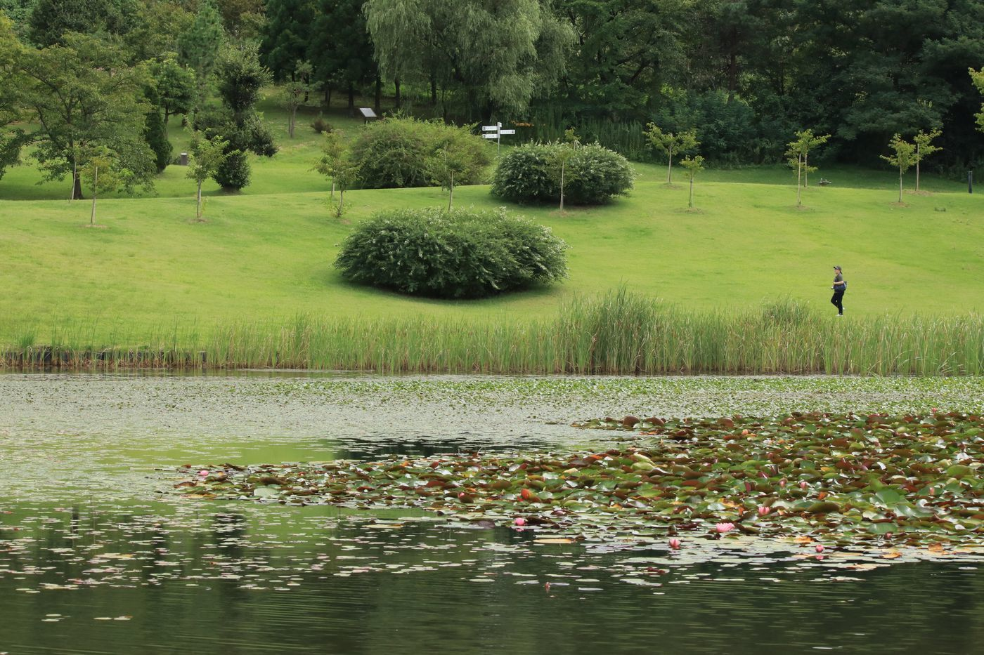 ●S2017・9・16県立植物園_87