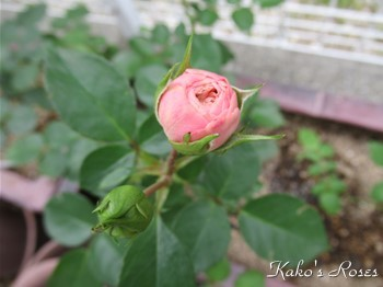 s-IMG_0950k30.jpg