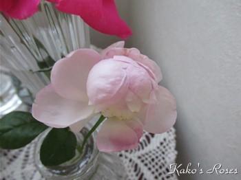 s-IMG_0963k30.jpg