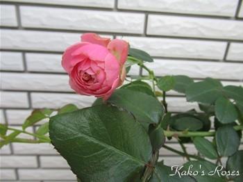s-IMG_1232k30.jpg