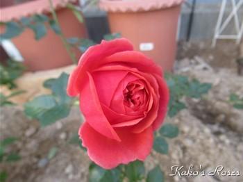 s-IMG_1435k30.jpg