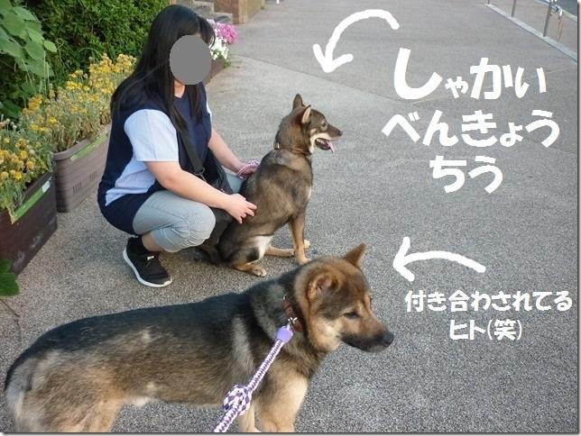 20170827淡路島04-31