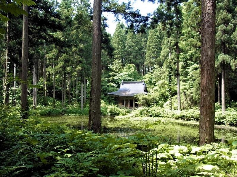 鬱蒼とした森を登りきると、突然視界が開け小沼の景観が現われる