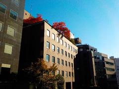 032ビルの上にも紅葉が