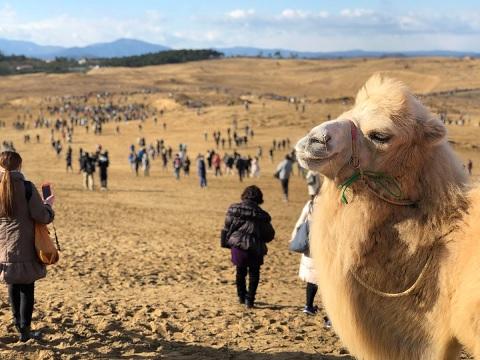 鳥取砂丘でポケモンGOのイベントが開催、人が集まりすぎてやばいwwwwwwwww