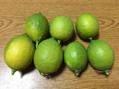 レモン最終