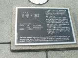 JR武生駅 生命の樹 説明