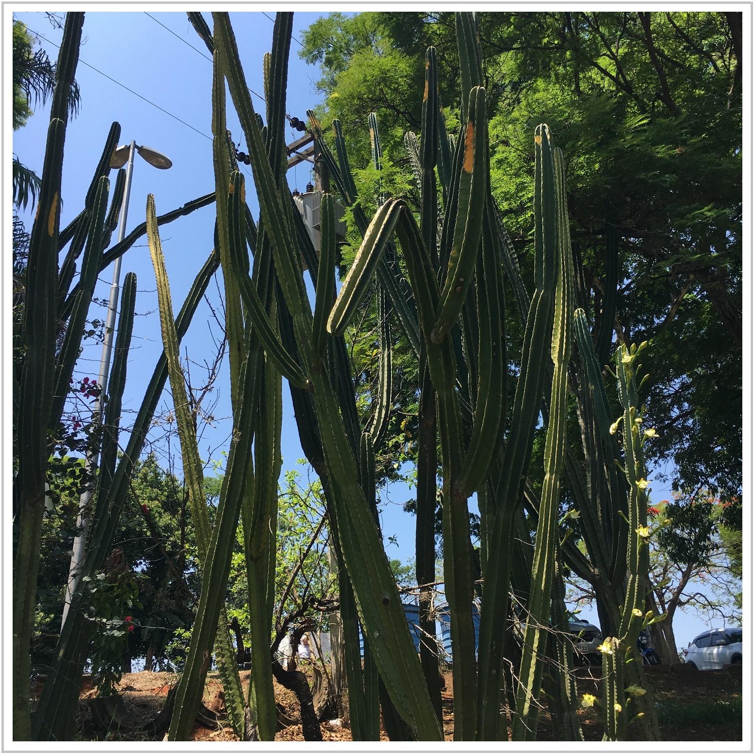 cactus_1_1018.jpg