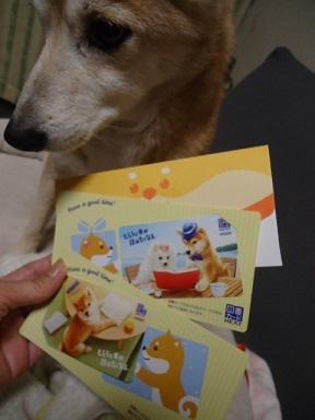 柴犬図書カード