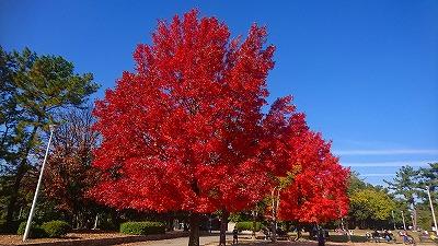 緑地公園紅葉
