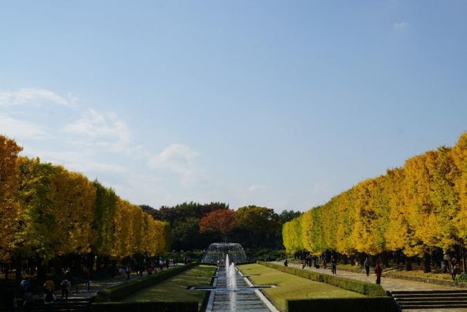 DSC05508昭和記念公園