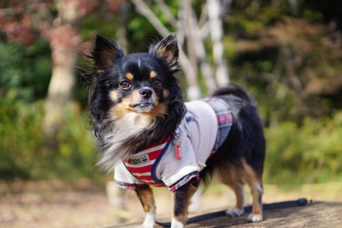 DSC06604モデル犬