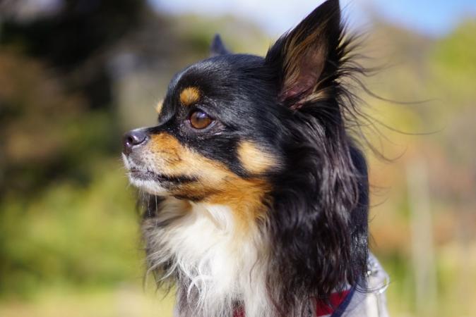DSC06634モデル犬