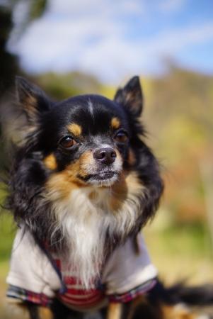 DSC06639モデル犬