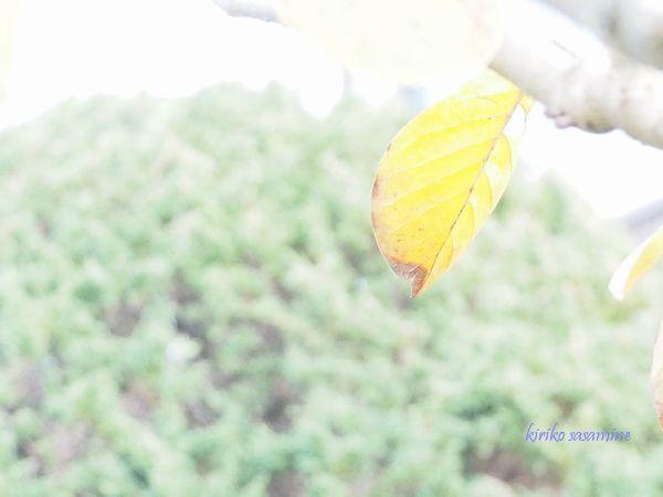 mokurenkouyou600.jpg