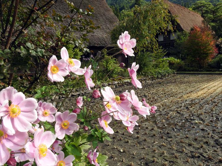 10月の3連休は世界遺産白川郷へ6