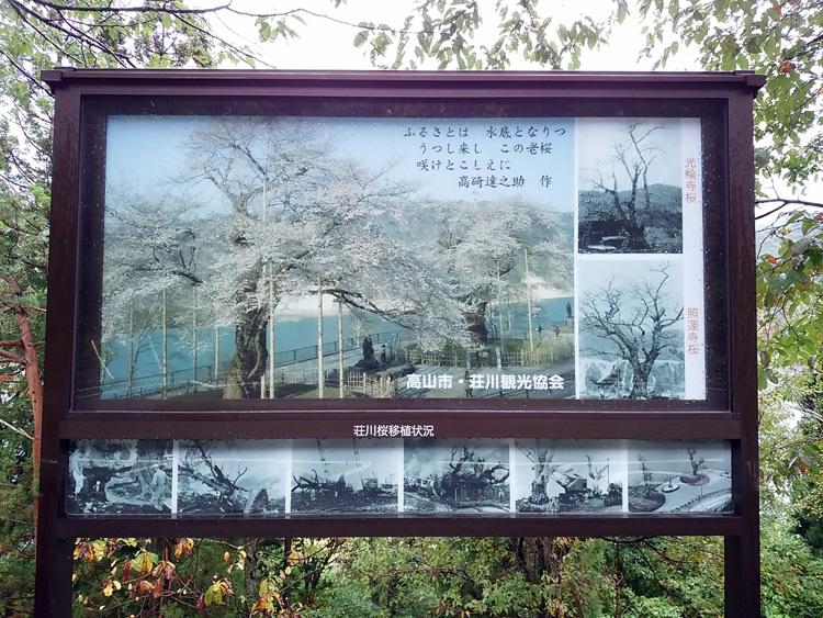 秋の荘川桜 風景2