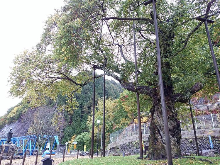 秋の荘川桜 風景3