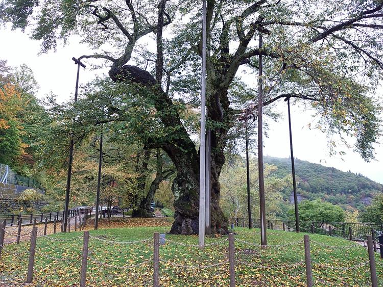 秋の荘川桜 風景4