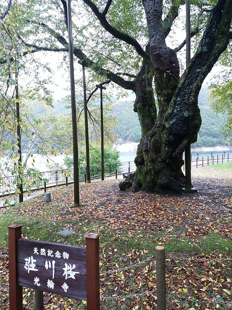 秋の荘川桜 風景7